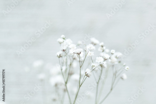 Small white flowers on an abstract background gypsophila flower small white flowers on an abstract background gypsophila flower babys breath flowers mightylinksfo