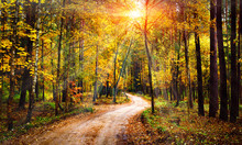 Autumn Forest Landscape On Sunny Bright Day. Vivid Sunbeams Through Trees In Forest. Colorful Nature At Fall Season.