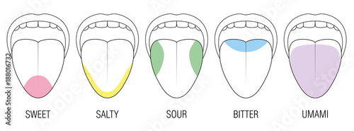 Human tongue with five taste areas - bitter, sour, sweet, salty and umami perception - colored division with zones of different taste buds - educational, schematic vector on white background Fototapet