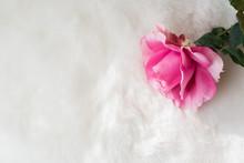 Pink Rose On White Fur Backgro...