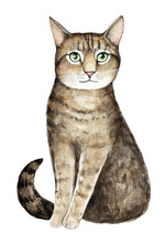 Watercolor Cat Portrait. Big Green Eyes, Striped Tabby Coat Pattern, Looking Away Intellectually. Fluffy, Sweet And Pretty. Hand Painted Water Color Art Illustration, Cut Out, On White Background.