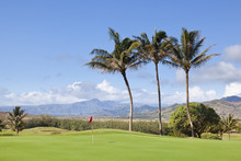 Palm Trees At Golf Course, Kauai