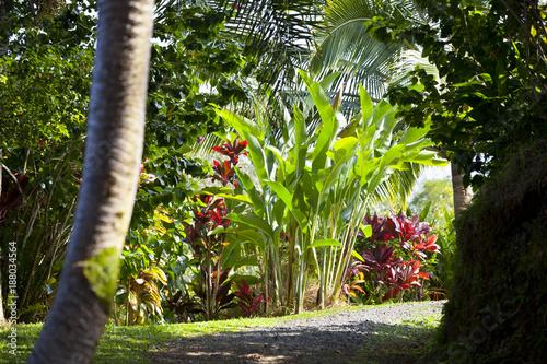 Montage in der Fensternische Grau Verkehrs Tropical Garden Landscape, Maui