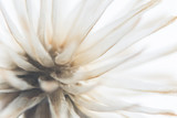 Background dry wild flower macro