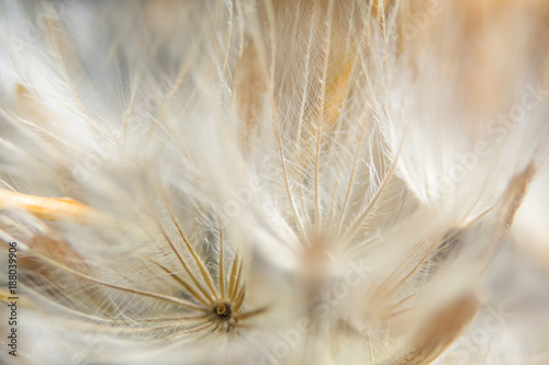 Fotografía Background dry wild flower macro