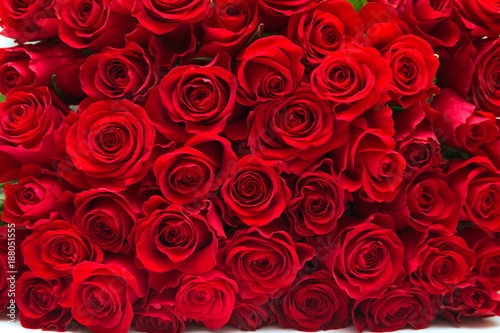 Foto op Canvas Roses Red roses
