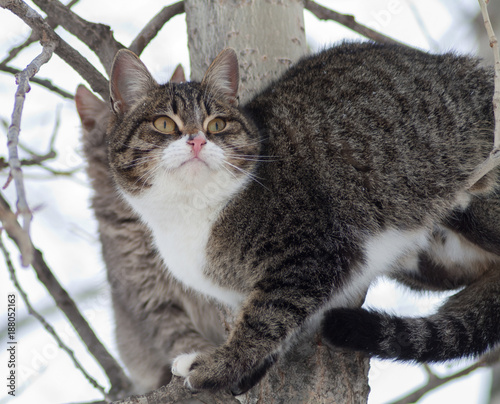 Photo  Street cats sitting on a tree