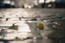 Wet Old Pavement With Puddle And Autumn Leaves