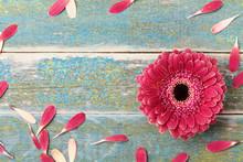 Gerbera Daisy Natural Flower F...