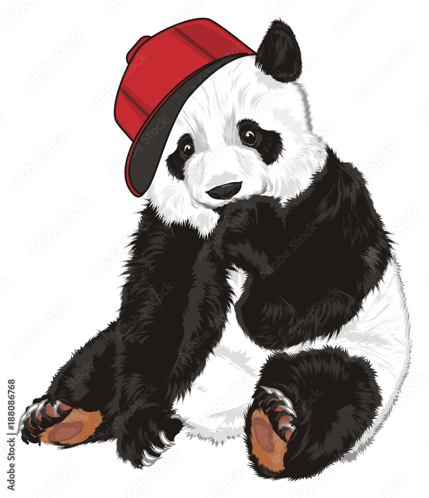 panda, bear, animal, China, zoo, bamboo, illustration, mask, cartoon, shy, Asia, cap, cool