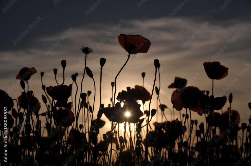 The contours of Poppy at sunset
