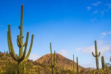 Saguaro Cactus Rising From Des...