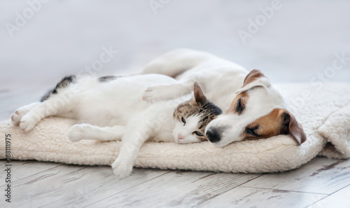 Spoed Foto op Canvas Hond Cat and dog sleeping