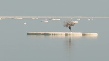 Lonely Tree On A Salt Lump At The Dead Sea