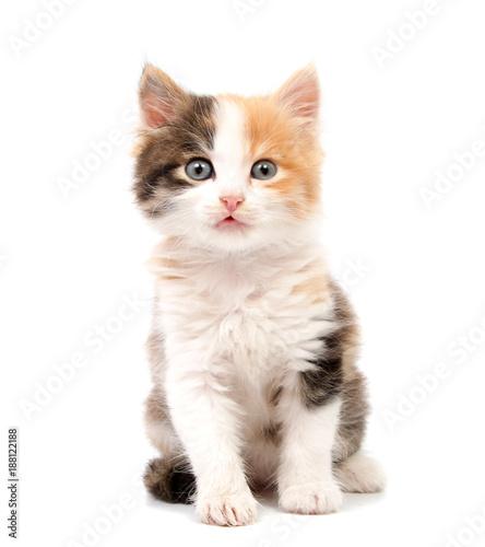Photo Beautiful cat kitten isolated on white background.