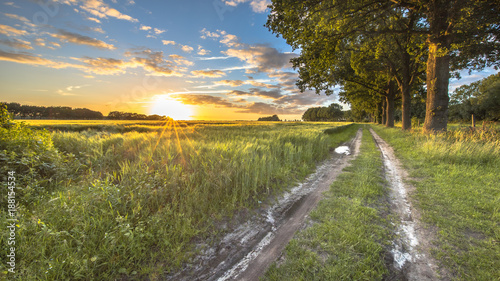 Foto auf Gartenposter Landschappen Wheat field along track with large old oaks