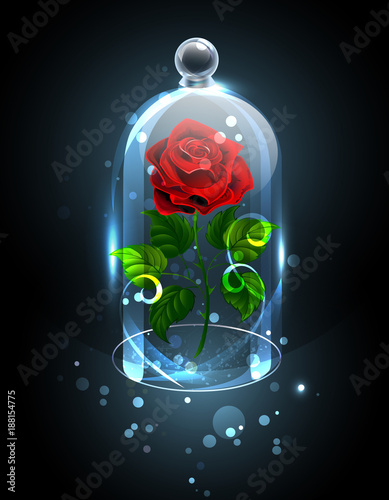 Fotografia Red rose under the crystal dome