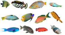 Reef Fish Of Indian And Pacifi...