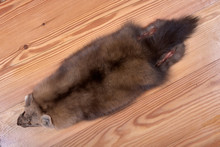Fur Skins Of Siberian Sable On...