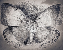 Grunge Butterfly Background Te...