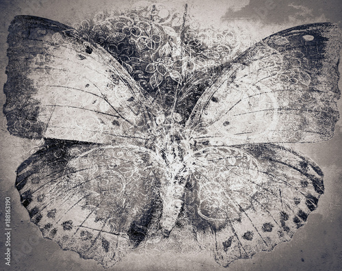 Fototapeta grunge butterfly background texture obraz na płótnie