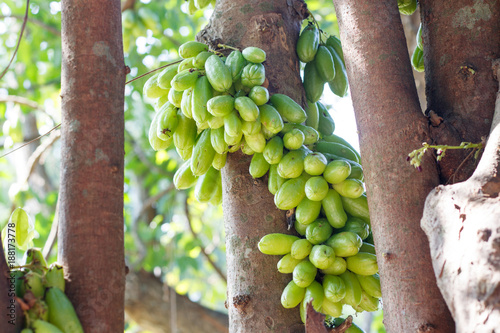 Tingling tree Canvas-taulu