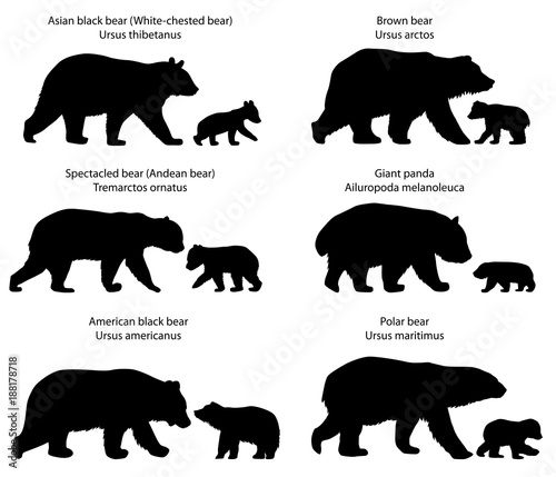 Fotografie, Obraz  Collection of silhouettes of  different species of bears and bear-cubs