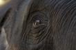 Close up The eye Asia Elephant.