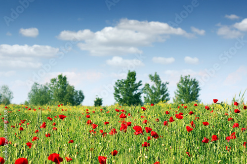 Foto op Plexiglas Blauwe hemel poppies flower meadow landscape