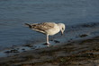 Ptak na brzegu morza