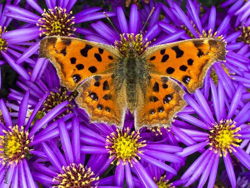 Fotografía  butterfly on flowers