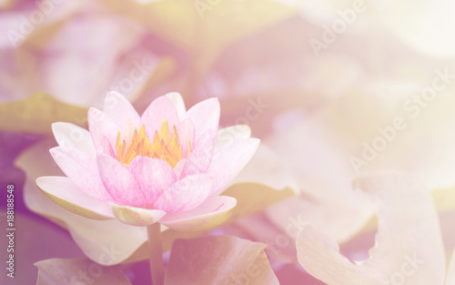 Deurstickers Lotusbloem Pink waterlily in the garden soft blur background in pastel tones.