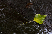A Leaf Stuck To A Rock Next To A Small Stream