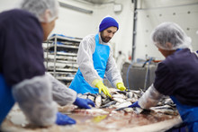 Group Of Seafood Processing St...