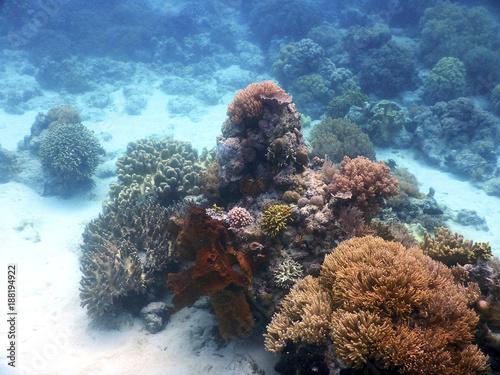 Fotografie, Obraz  Paisaje submarino