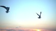 Seagulls fly over the sea. Slow motion. 240 fps.
