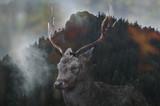 Podwójna ekspozycja jelenia - 188209581