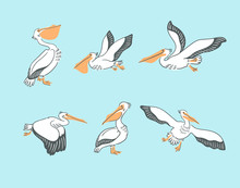 Hand Drawn Cute Cartoon  Pelicans In Different Poses. Vector Illustration With Birds.