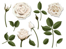 A Set Of Flower Parts. Inflorescence, Bud And Leaf Of A White Rose. Vector, Detailed, Realistic Illustration, Isolated. Elements For Floral Design Of Greeting Card And Bouquet.
