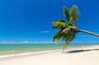 Palm tree on white sand beach in Thailand