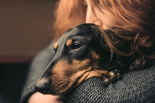 Portrait Of A Red-haired Woman Who Hugs A Sleepy Black Dog, Duchshund.