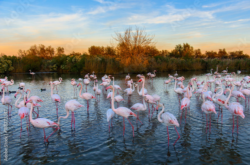 Poster de jardin Flamingo Flamants rose en camargue