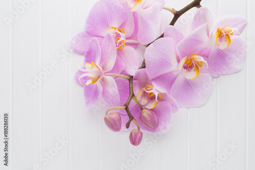 Pink orchid flower on a white wood textured background, space for a text.
