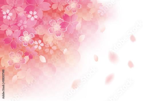 Poster Blanc 優しい桜 和柄