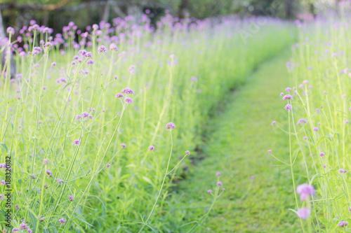 Photo Purple flowers in garden.