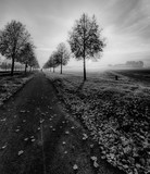 Fine art monochrome scenic glorious autumn sunrise on an alley with sky and clouds and a cycle path with leaves  and a wanderer on the path and fog over the fields - 188330753