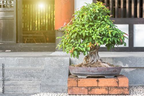 Spoed Fotobehang Bonsai Bonsai tree on ceramic pot in bonsai garden.