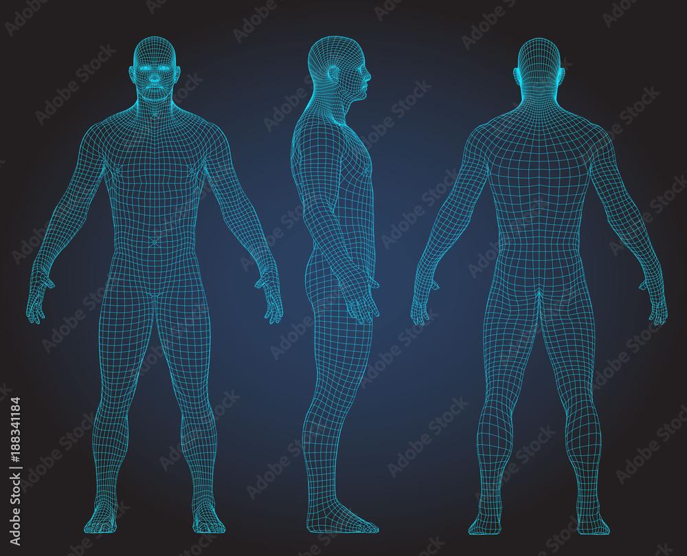 Fototapeta Set of 3D wire frame human body vector illustration. Front, Back, Side view