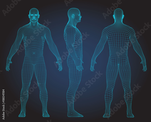 Obraz Set of 3D wire frame human body vector illustration. Front, Back, Side view - fototapety do salonu