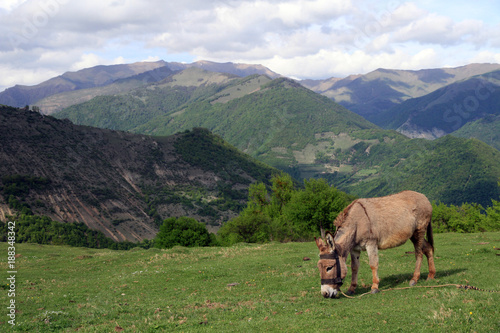 Landscape with donkey, Caucasus, Georgia